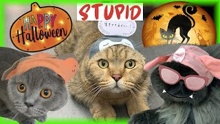 【STUPID CAT】4K | EP7 | Stupid cat's special uniform | 這是真正的貓貓