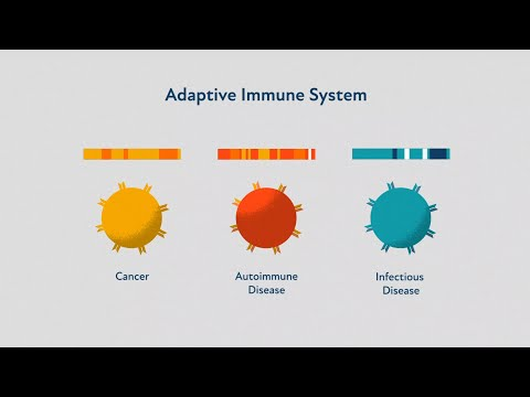 The Adaptive Immune System: A Primer