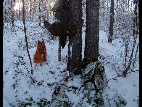 навигаторы уже щобор подранка лося по снегу для