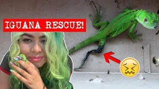 a-subscriber-helped-me-rescue-this-injured-iguana-new-pet