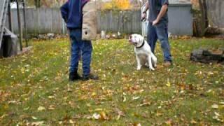 Boston Dog House - Dog Training Specialist