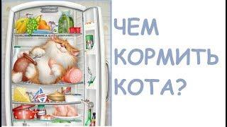 Чем кормить кота?