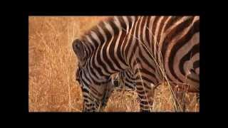 Tanzania African Walking Safari and Wildlife Adventure