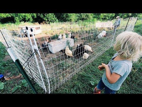 Sagging Chicken Fence GONE Forever :)