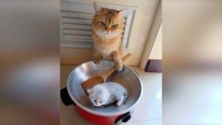 Смешные кошки и собаки ИЮЛЬ 2019 Новые приколы с животными смешные коты 2019 Funny Cats Animals 89