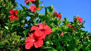 中野律紀 - 一切朝花節