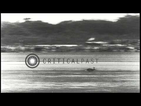Spectators in the stands look at NATO (North Atlantic Treaty Organization) aircra...HD Stock Footage