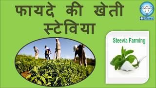 फायदे कि खेती स्टेविया, Stevia Production In India, Profitable Farming - Stevia, Medicinal Plant