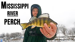 Tip Down Perch Fishing on the Mighty Mississippi 2021