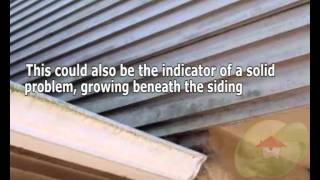 Mold Is Give Only On The Exterior Of The Siding