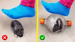 13 DIY Hamsters Hacks and Creative Crafts!