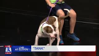 TANK - Fox 13 Best Friend from the Humane Society of Utah