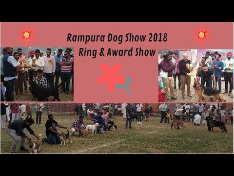 Rampura Dog Show 2018 - Wholesale Dog Market - Bhola Shola Films