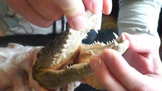 Крокодил в кефирном маринаде