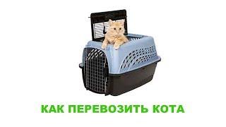 Как перевозить кота. Ветеринарная клиника Био-Вет.