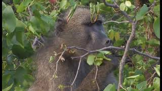 Repeat youtube video Kruger National Park Camps Disk 1 HD - South Africa Travel Channel 24
