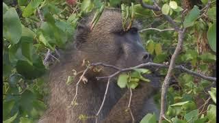 Kruger National Park Camps Disk 1 HD – South Africa Travel Channel 24