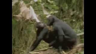 Секс животных! Прикол! С озвучкой!