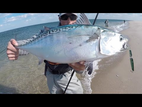 HOT SURF FISHING for False Albacore Oct 2018