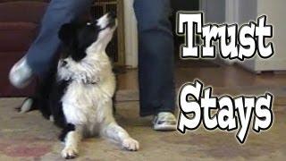 Trust Stays: Clicker Dog Training