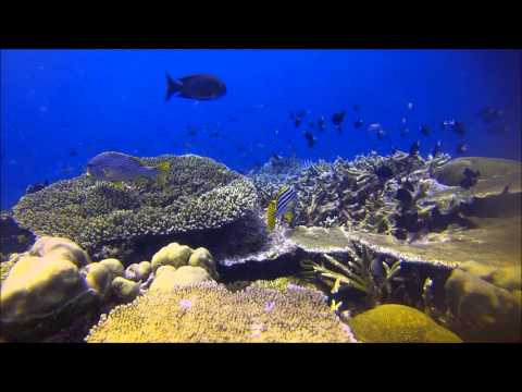 Tufi Dive Resort, Papua New Guinea 2016