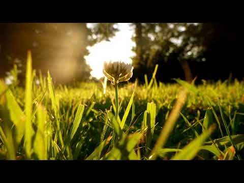 nEscafeX - Sluneční duše