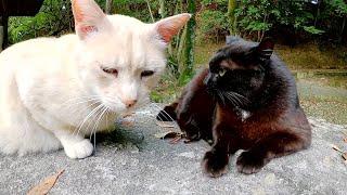 おはぎのような猫をモフっていたら、きな粉餅のような猫もやってきた