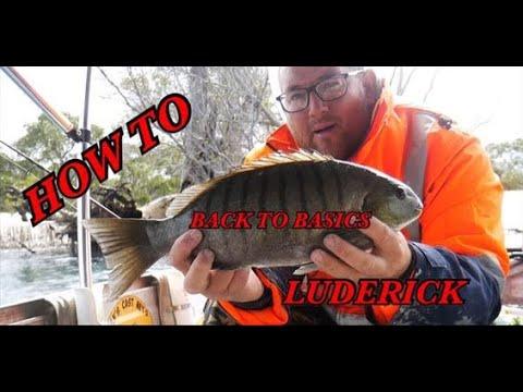 Fishing For VEGETARIANS. Luderick Fishing