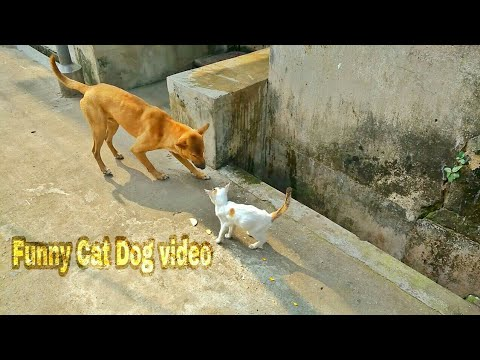 Angry Cat vs Dog Video
