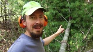Tree To Beam - Freehand Chainsaw Milling