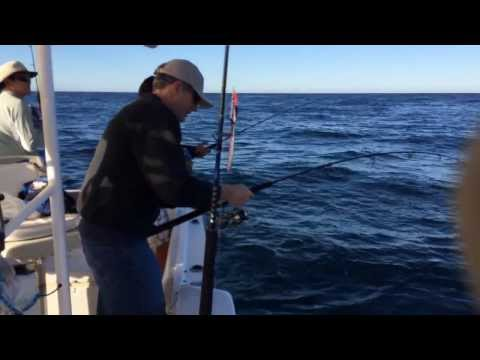 San Carlos Yellow Tail (Hamachi) Fishing 2014