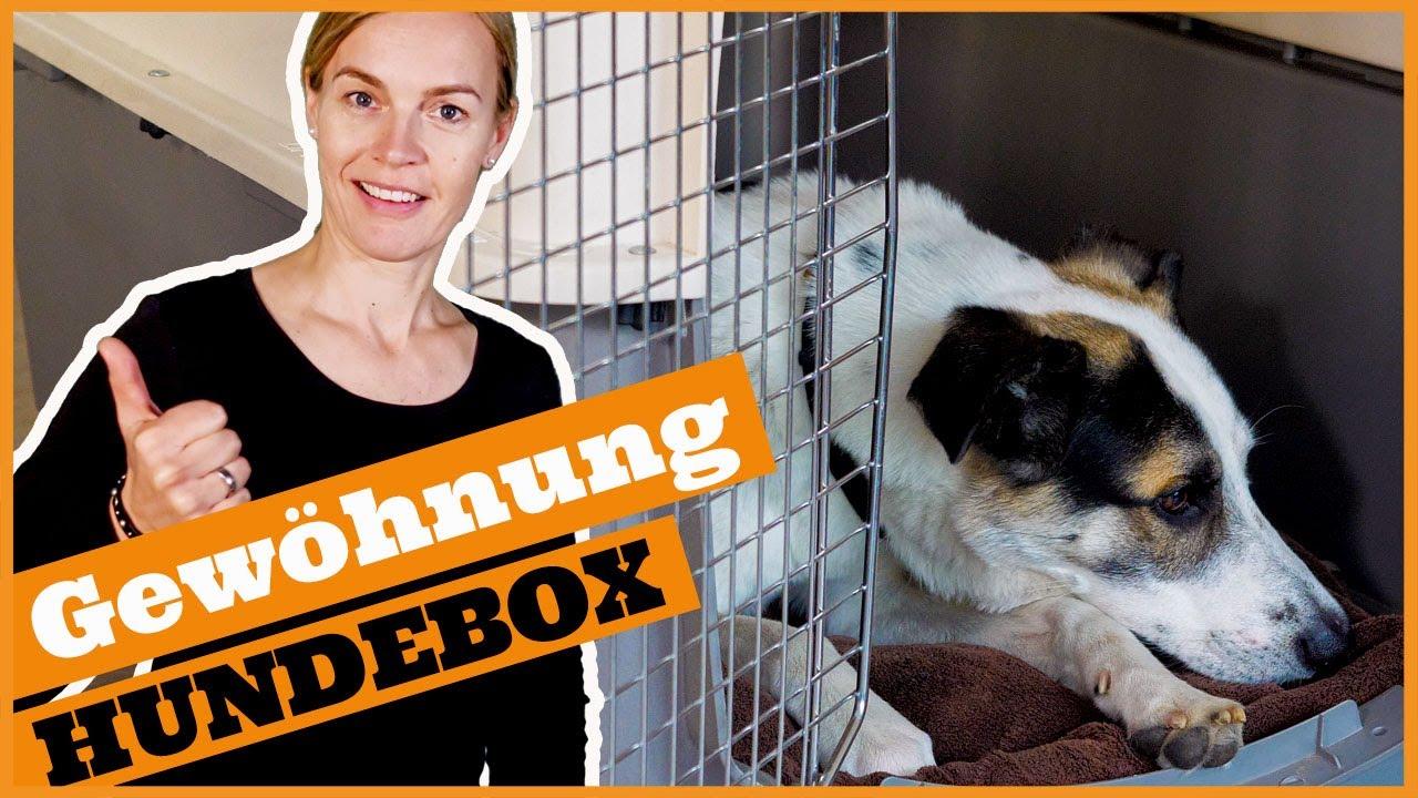 So gewöhnst du den Hund an die Box I Warum die Hundebox in der  Hundeerziehung helfen kann