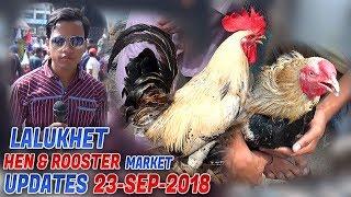 Lalukhet Birds & Hen Rooster Market 23-9-2018 Latest Updates (Jamshed Asmi Informative Channel)
