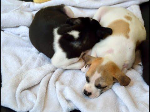 دراسة: مشاركة المرأة للسرير مع الكلاب يحسن نومها  - 11:55-2018 / 11 / 29