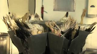Shocking Footage Exposes Cruelty and Abuse on Farms Supplying Fortnum & Mason Foie Gras Distributor thumbnail