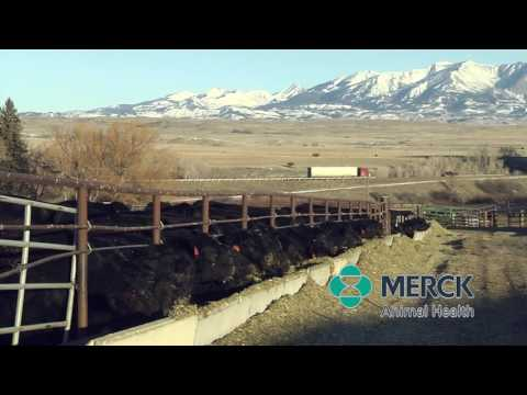 Merck Animal Health - Feedlot Health