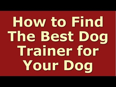 How To Find The Best Dog Trainer For Your Dog (Dog Training)