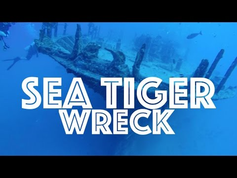 Hawaii Adventures: Diving the Sea Tiger Wreck