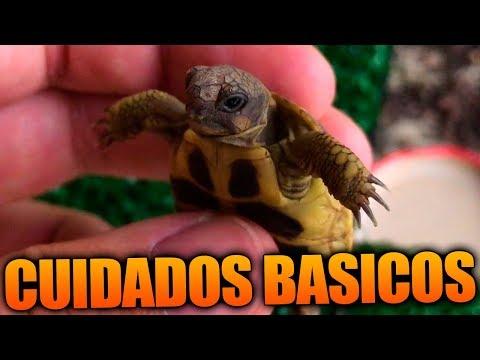 Nombres Para Tortugas Hembras Machos Y Unisex