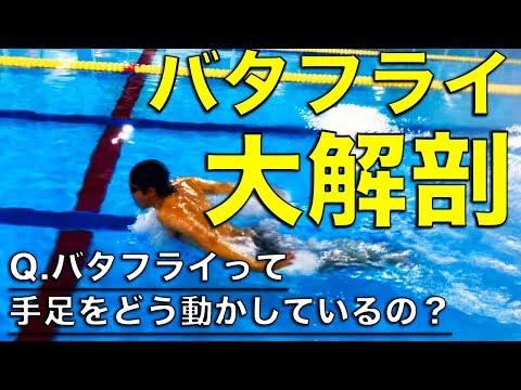 【初心者向け】バタフライ【ストローク】【キック】【呼吸】のタイミング