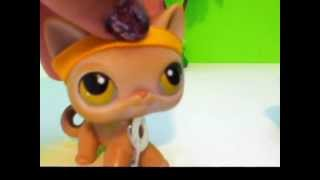 ALL MY LPS CATS!!!