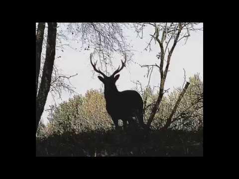 Youtube: L'Animalerie au Transbordeur (15/12/2018)