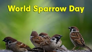 20th March - World Sparrow Day