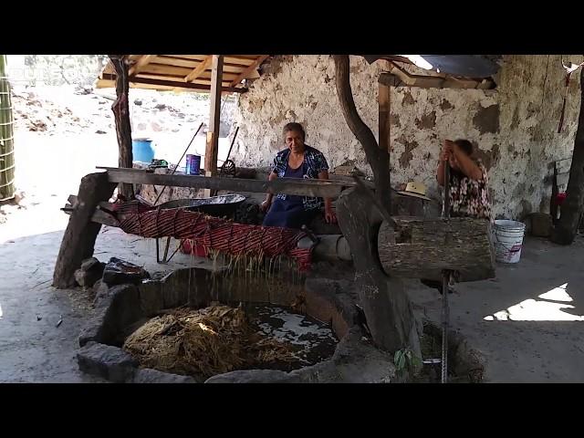 Mezcal de Mexquitic: el pasado les regala un futuro