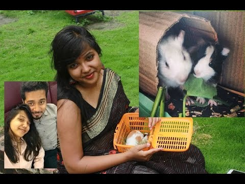 #Vlog5 When Tamal couldn't kill a Spider & I got Guinea Pigs | Chatterbox |
