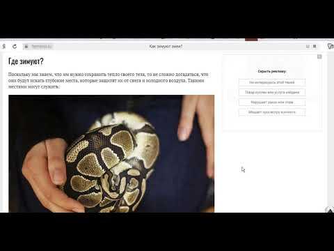 В Чечне нашли громадную змею