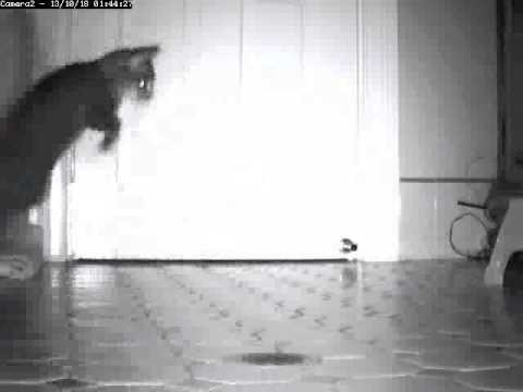 Remote Controlled Door Scratching Cat Repellent Water Cannon Youtube