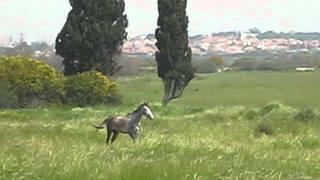 23 март 2012 лошадь