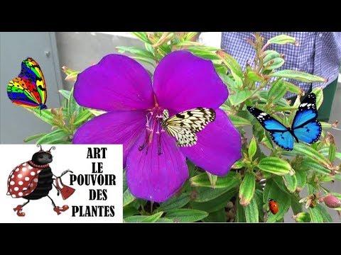 Conseils jardinage comment faire l 39 entretien et l 39 arro for Jardinage conseil