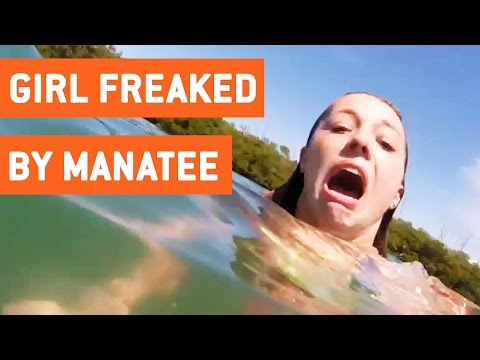 Girl Freaks Out About Manatee | Cow of the Sea